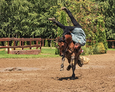 man riding horse photograph