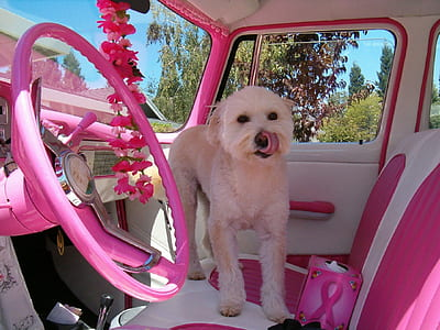 white dog on white and pink car seat