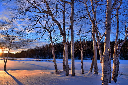 brown bare trees during sunset photography