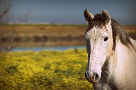 white horse near yellow flower at daytime