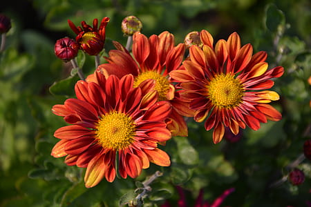 orange and red multi-petaled flowers in focus photography