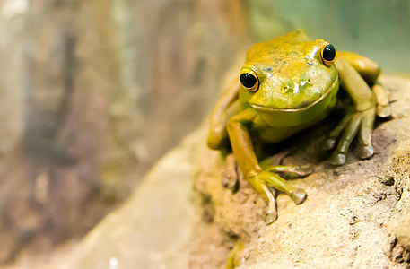 green frog on gray stone