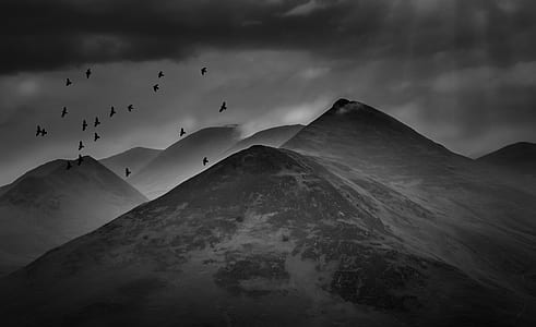 gray scale of maintain and flocks of bird