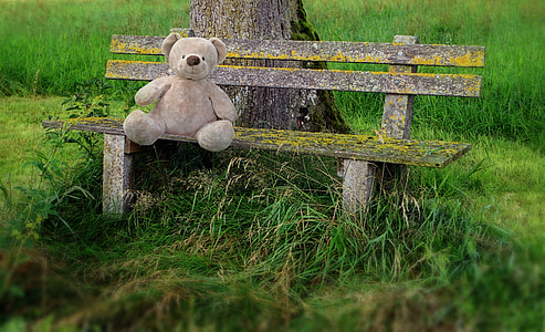 bear sitting on bench
