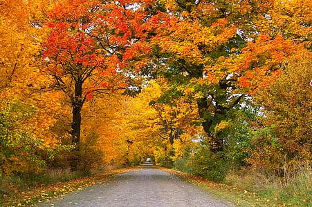 grey road between trees at daytime