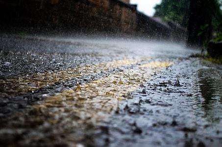 macro photo of rain drops
