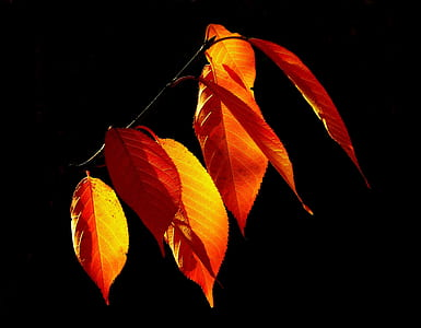 red leaves photography