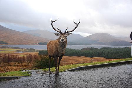 buck on roadside near flowing water during daytime
