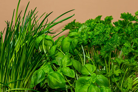 green herbs near beige wall