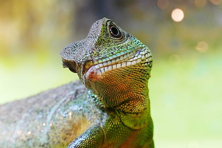 selective focus photo of green and brown chameleon