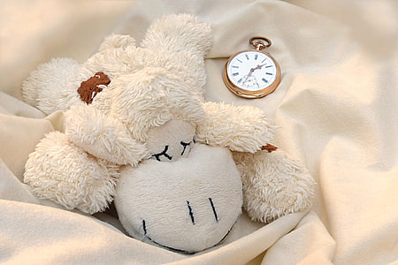 white sheep plush toy and gold-colored pocket watch