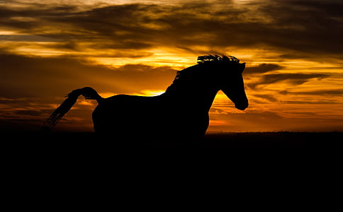 silhouette photo of horse