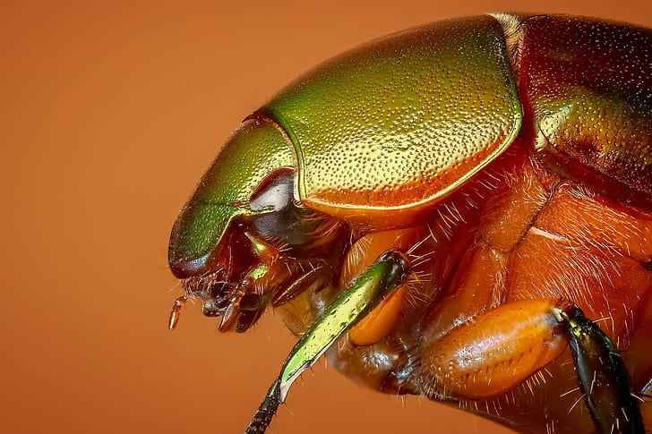 green and orange insect
