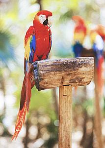 tilt shift lens photography of scarlet macaw bird during daytime