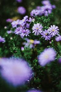 Purple flowers close-ups