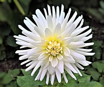 white petaled flowering plant