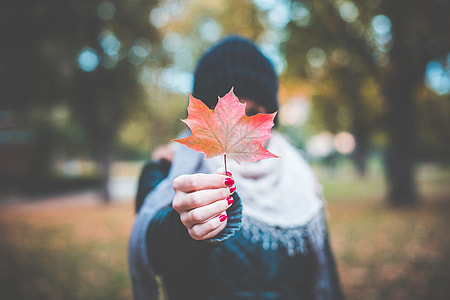 Young Girl Holding Autumn Colored Maple Leaf #2