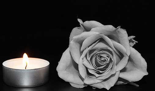 gray flower beside lighted tealight candle