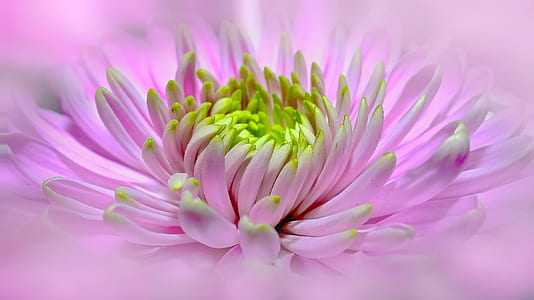 focal focus photography of pink and green petaled flower