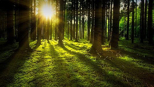 sun rays on forest
