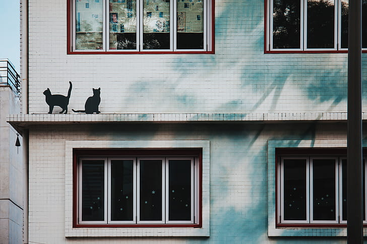 two black cats on gray painted building beside window