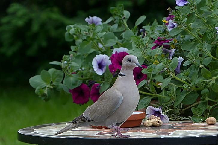 gray bird on black table