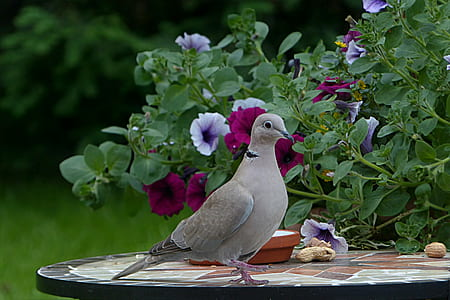 gray bird on black table