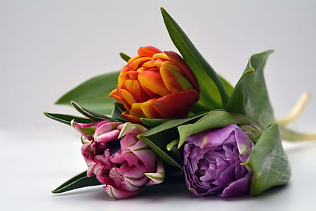 three pink, purple, and orange flowers