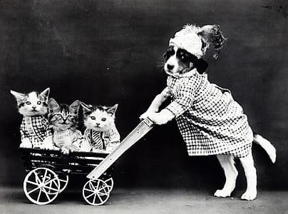 photo of dog wearing dress holding push kart with three kittens