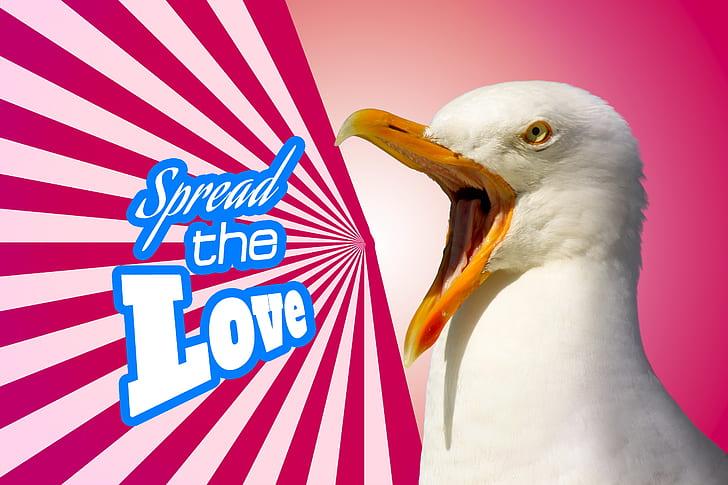 ring-billed gull photo