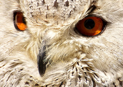 closeup photography of owl face