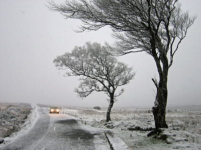two leafed trees during winter