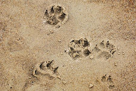 pop prints on brown sand