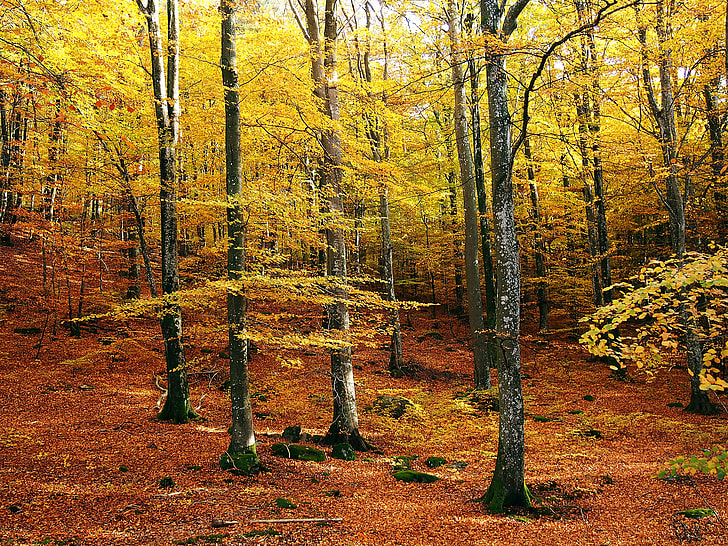 yellow tree on forest