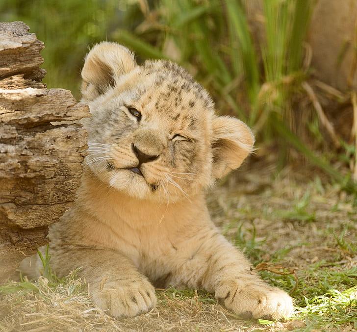 wildlife photography of cub