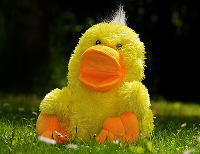 yellow duck plush toy on green grass