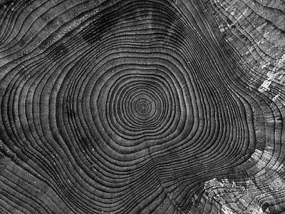 closeup photography of spiral illusion