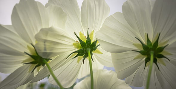 close up photography of white petal flowers