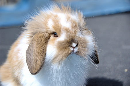 closeup photo of white and brown rabbit