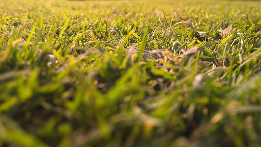 Green Grasses In-close Up Photography