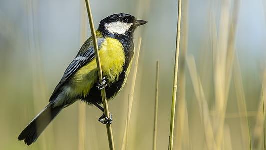 selective focus photo of yellow and black bird