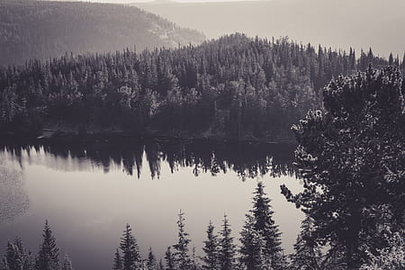 grayscale landscape photo of forest and hill