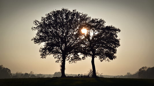 photography of silhouette two trees during daytime