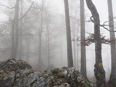 bare trees and rocks surrounded with fog