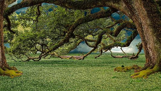 green trees digital wallpaper