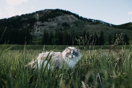 House Cat Gone Wild