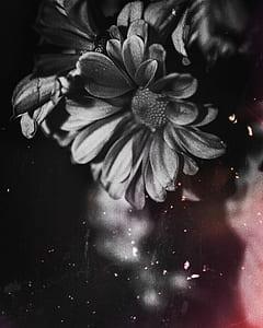 Black Petal Flower