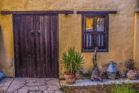 green leaf plant beside brown wooden door