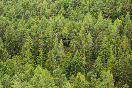 Green Green Forest Trees