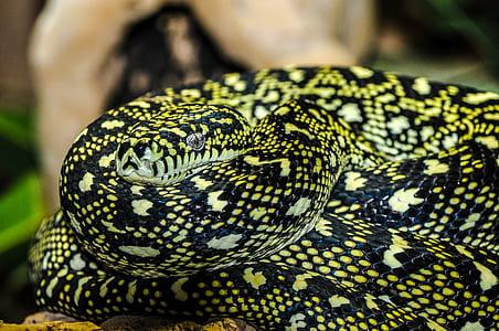 black and green snake closeup photography